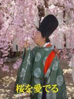 Ujisakura_068