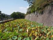 Kyushuensei_090