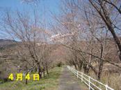 Sakura404_1_2