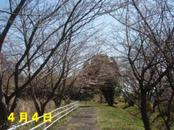 Sakura404_2