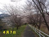 Sakura407_024