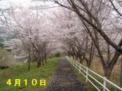 Sakura410_001