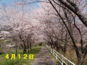 Sakura412_001