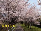 Sakura412_002
