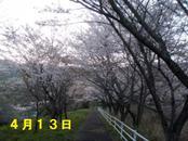 Sakura413_001