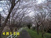 Sakura413_002