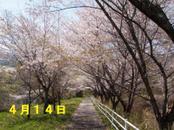 Sakura414_003