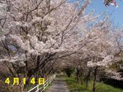 Sakura414_004