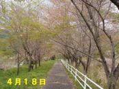 Sakura418_009