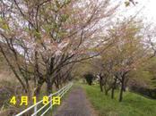 Sakura418_010