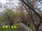 Sakura419_001