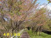 Sakura419_002